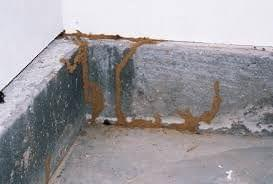 Mold Survey